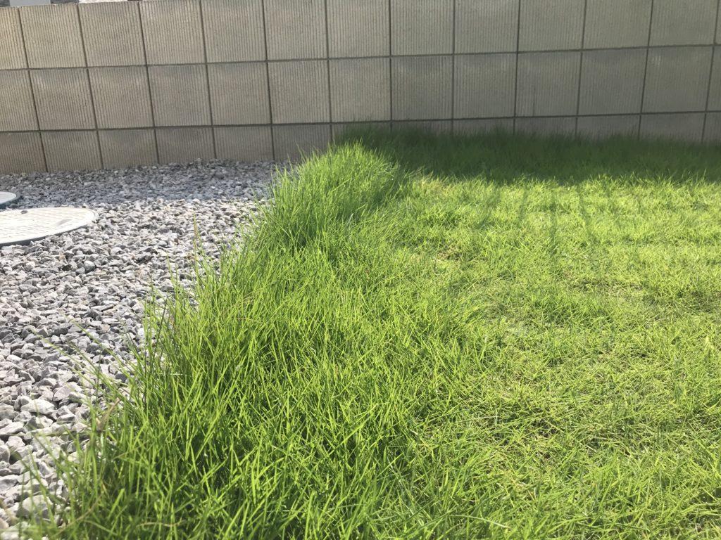 芝刈り前の写真