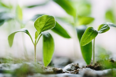 社会人の自己啓発。成長するには短所より長所を伸ばすべき理由とは