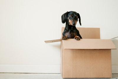 引っ越し業者の選定で損をしない方法。選定方法のコツ